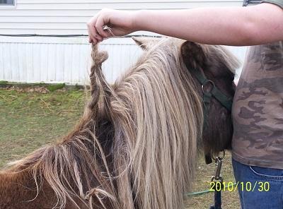 Кто плетет у лошадей косы